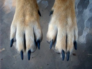 paws-459713