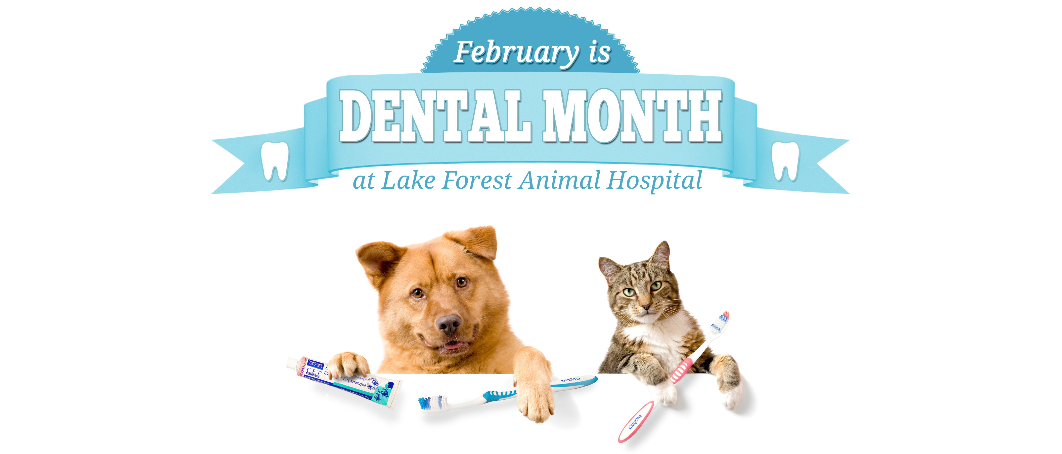 Our National Pet Dental Health Month Savings Of 10 Off ALL Services Applies To Any Cleaning Scheduled During February 2017